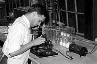 CHEMIST, 1938.Chemist running microscopic experiment on sweet potato starch, Laurel, Mississippi. Photograph by Russell Lee, November 1938.