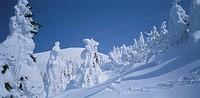 Trees covered in snow, Mt. Jizo, Zaou, Yamagata Prefecture, Japan