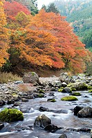 River flowing through autumnal forest