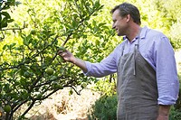 Smiling man looking at fruits on tree in garden