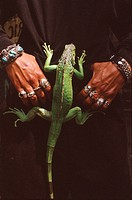 Hold hands with rings lizard