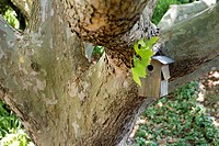 Close_up of birdhouse on a tree