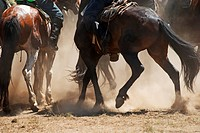 Kokpar _ traditional nomad horses competitions