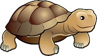 Cute tortoise vector illustration