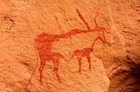 Depiction of cattle, prehistoric rock paintings, Acacus Mountains, Sahara desert, Libya