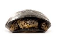 Turtle _ p©lusios subniger