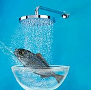 Fish under shower