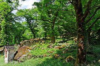 roadside shrine - chestnut trees in orchard - bavona valley - canton of ticino - switzerland