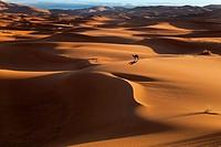 Camel on Erg Chebbi Dunes Sahara Desert Morocco North Africa March