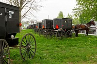 Many Amish horse and buggies in a pasture near Shipshewana, Indiana, USA
