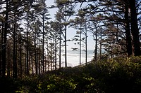 Ocean Waves Through Coastal Trees, Hug Point State Park, Oregon, USA