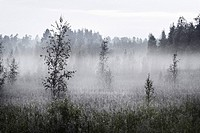 Foggy Meadow, Halsingland, Sweden