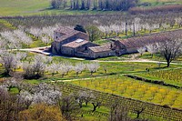 Vineyards in spring time, Vaucluse, Luberon, Provence-Alpes-C&#244;te d'Azur, France