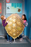 Two girls standing behind green sea turtle shell (thumbnail)