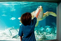 Boy reaching towards sea turtle in aquarium