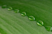 dew drops on green leaf