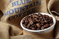 Coffee beans Blue mountain in a bowl