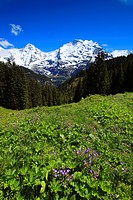 Alp, alps, flora, view, mountain, mountain panorama, mountains, mountain flora, mountain spring, mountain massif, mountain panorama, mountain wall, Be...