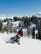 A single snowmobiler makes his way up a slope on a stunning late winter day, Monashee mountain range, near Valemount, Thompson Okanagan region, Britis...