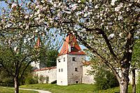 Germany, Bavaria, Upper Palatinate, Berching, View of city wall and Biersiederturm tower with blooming apple tree