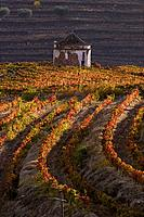 Dovecote at the vineyards of Douro valley, Portugal