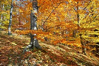 Autumn colors in the forest, Poland, Europe