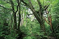 Forest, Yaku Islands, Kagoshima Prefecture, Japan