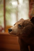 A stuffed brown bear cub sits in a state park office.