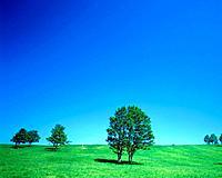 Trees in field, Hokkaido Prefecture, Japan