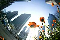 Orange flowers at street in city, fish_eye lens, Tokyo prefecture, Japan