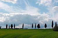 cypress trees against blue sky and clouds, with green field in foreground