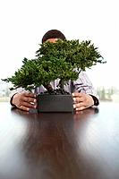 Person sitting at table behind bonsai tree