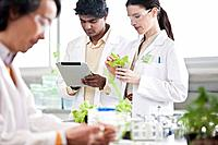 Scientists working with plants in laboratory