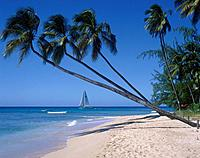 Palm trees. Empty sandy beach. Sea. Sailing boat / yacht