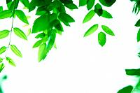 Leafy green tree branches
