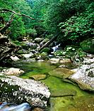 Forest stream, Yaku Islands, Kagoshima Prefecture, Japan