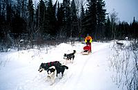 Deerhurst Resort. Snow. Husky dogs with sleigh sledge and riders. Trees.
