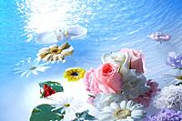 Flowers and leaves floating on water