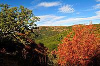 Autumnal Landscape, Gennargentu massif, Sardinia, Italy / Herbstlandschaft, Gennargentu_Massiv, Sardinien, Italien