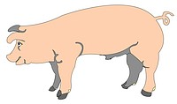 cartoon of a pig, vector art illustration more cartoons in my gallery