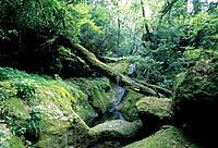 Kikuchi valley. Kumamoto Prefecture, Japan