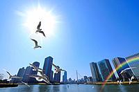 Seagulls flying in the sky, Tokyo Prefecture, Honshu, Japan
