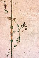 In the shadow of Vesuvius, the ruins of the Imperial Villa of Oplontis _ detail of frescoes beside swimming pool