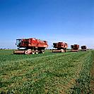 The majority of the pea crop in Lincolnshire is harvested with a conventional combine harvester,usually in August. The crop is sold and processed eith...