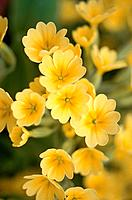 Yellow flowers, close up