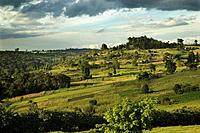 An evening view of farmland and forest on the Mau Escarpment in Kenya.