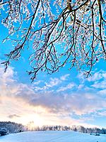 The Twelfth in Lagan Valley in the snow, Belfast.