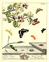 Butterflies and moths. Illustration from ´The Aurelian: or, Natural History of Insects, Namely Moths and Butterflies together. Together with the Plant...