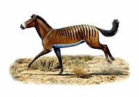 Prehistoric horse. Computer artwork of an Anchitherium sp. prehistoric horse. Anchitherium was small leaf_eating horse that lived during the Miocene e...