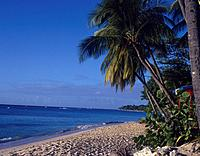 Beach. Sand. Clear calm sea. Palm trees